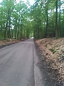 Cycling in Gelderland (the Netherlands)