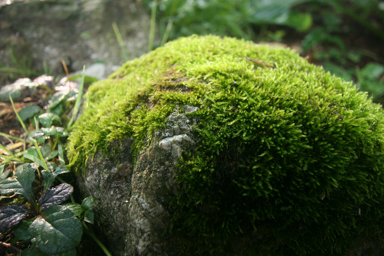What's so Freaking Good About Moss Anyway?