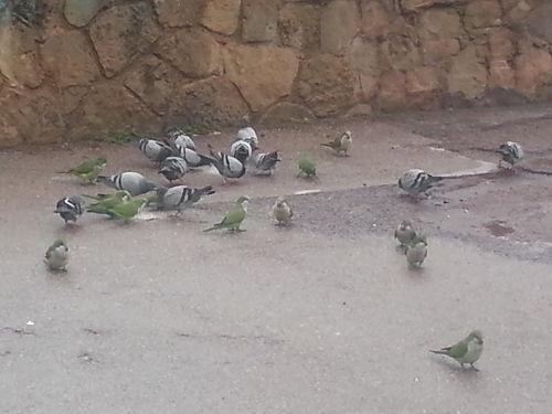 Birds in Barcelona